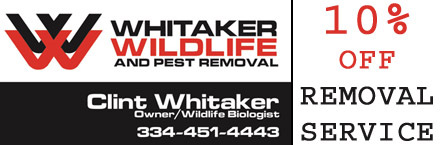 Large_whitaker_wildlife_coupon_for_prattville_montgomery_auburn_al