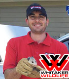 Normal_clint_whitaker_with_whitaker_pest_removal_and_animal_removal_services