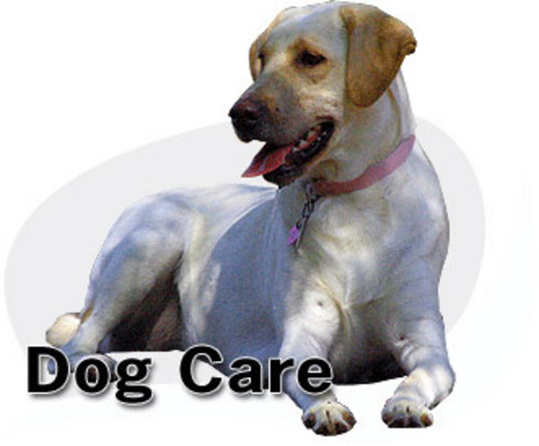 dogs care and - photo #30