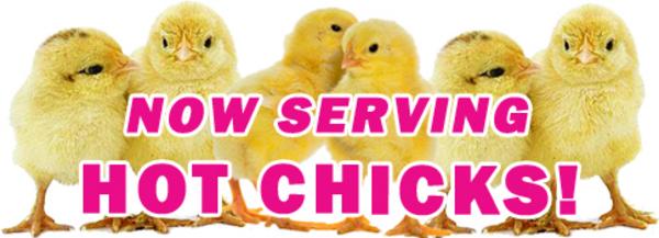 baby chicks for sale in prattville al at Prattville Farm Center