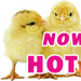 Thumb_hot_chicks_for_page_ad