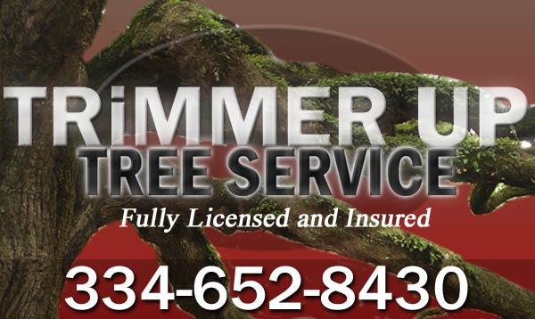 Trimmer up tree service in prattville, deatsville and millbrook, alabama