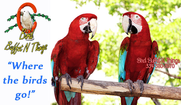 bird buffet n things in prattville al