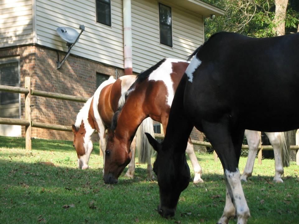 Prattville, AL Pony Rides