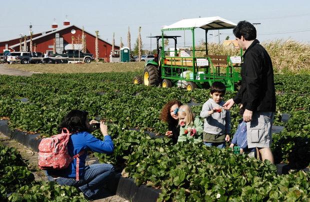 Bedner 39 S Farm Fresh Market In Boynton Beach Florida Relylocal